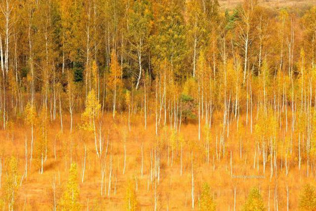 Открыто раннее бронирование золотой осени в Мальской Долине!